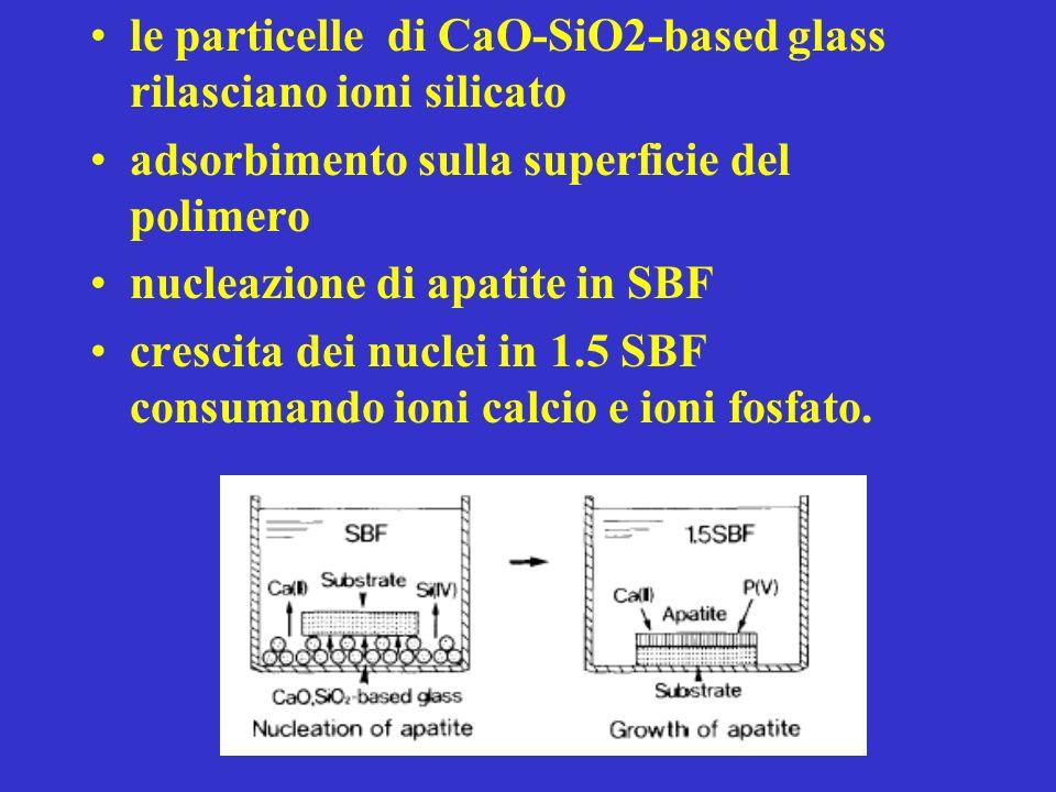le particelle di CaO-SiO2-based glass rilasciano ioni silicato