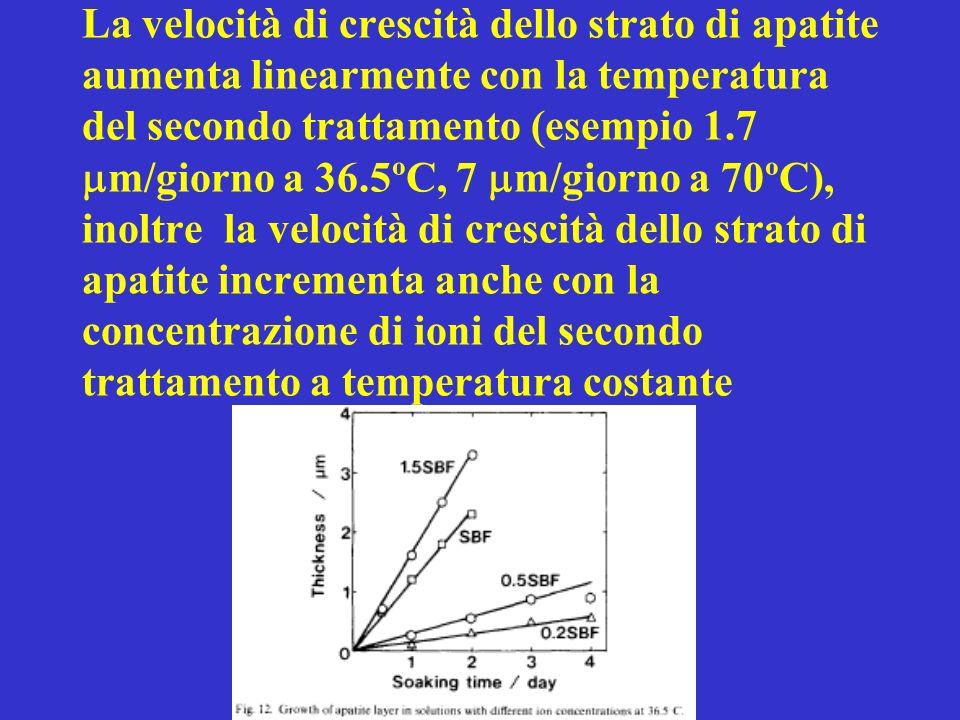 La velocità di crescità dello strato di apatite aumenta linearmente con la temperatura del secondo trattamento (esempio 1.7 m/giorno a 36.5ºC, 7 m/giorno a 70ºC), inoltre la velocità di crescità dello strato di apatite incrementa anche con la concentrazione di ioni del secondo trattamento a temperatura costante