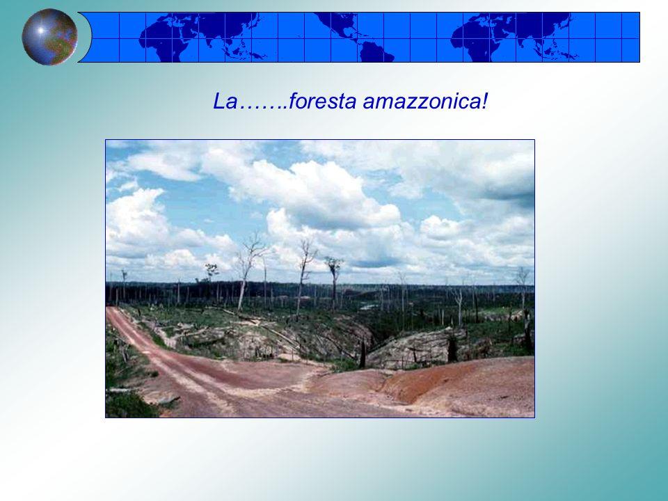 La…….foresta amazzonica!