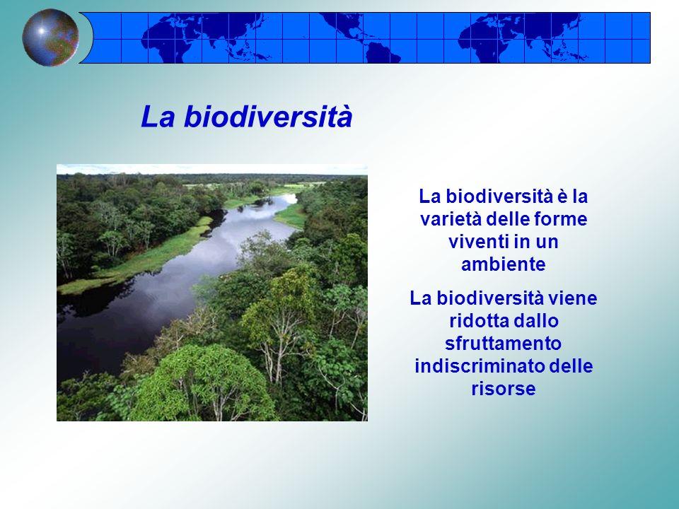 La biodiversità è la varietà delle forme viventi in un ambiente