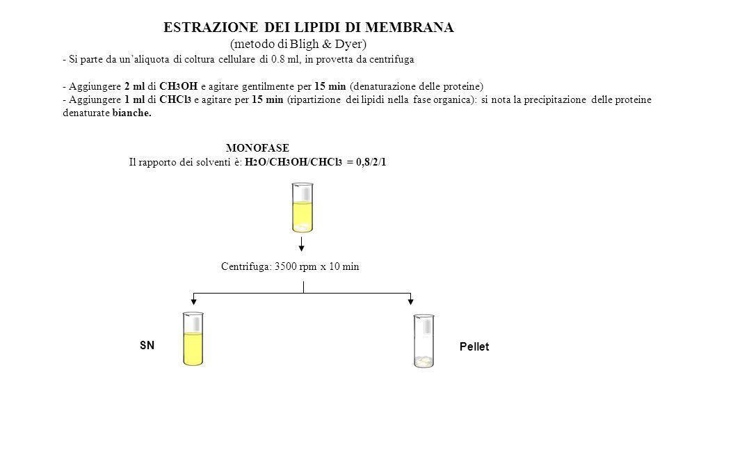 Il rapporto dei solventi è: H2O/CH3OH/CHCl3 = 0,8/2/1