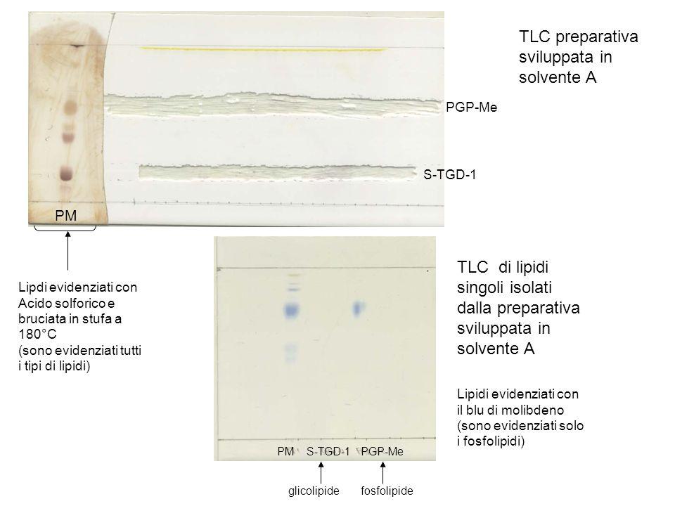 TLC preparativa sviluppata in solvente A
