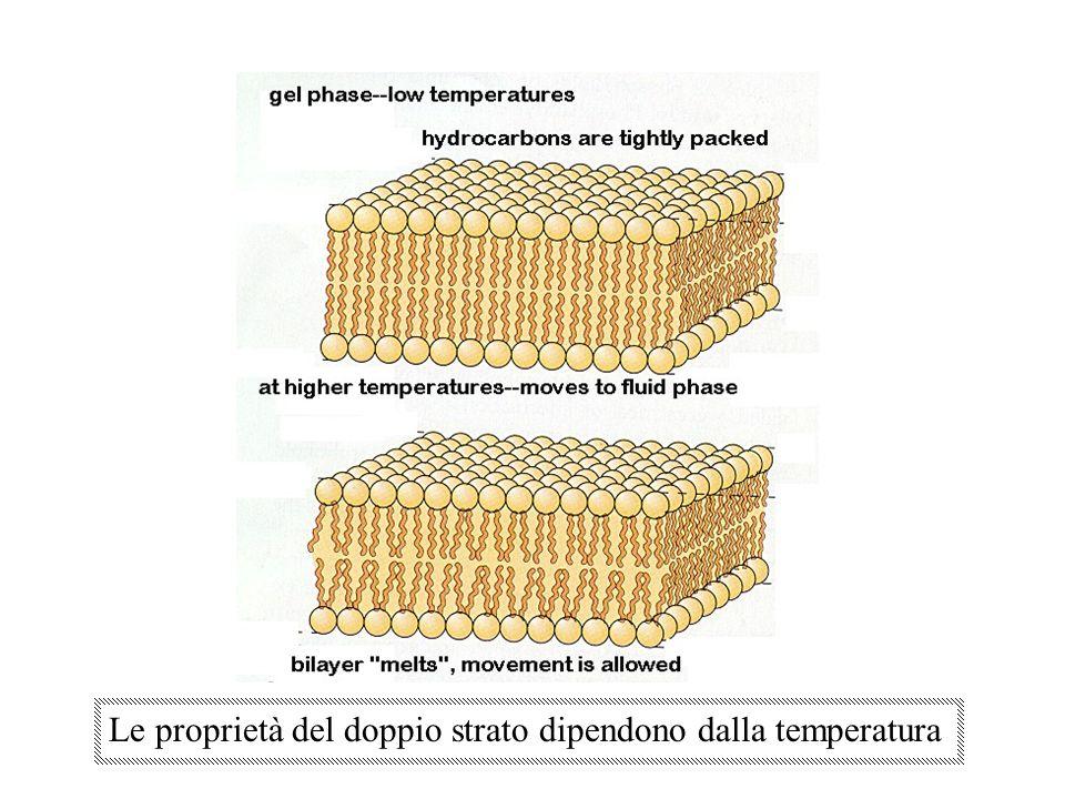 Le proprietà del doppio strato dipendono dalla temperatura
