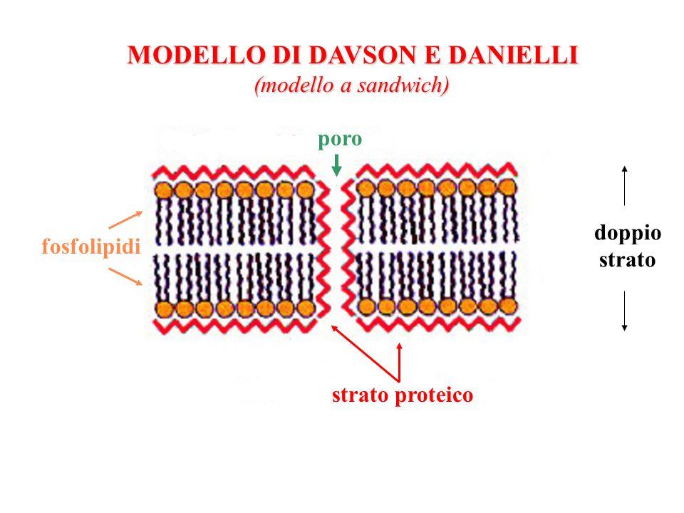 MODELLO DI DAVSON E DANIELLI