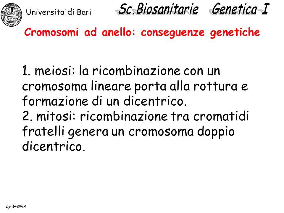 Cromosomi ad anello: conseguenze genetiche