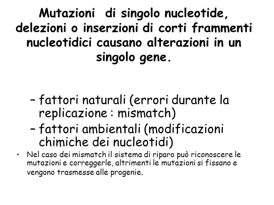 fattori naturali (errori durante la replicazione : mismatch)