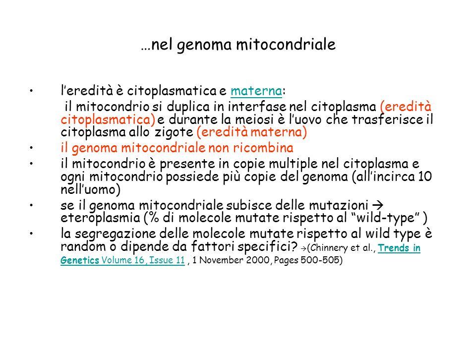 …nel genoma mitocondriale