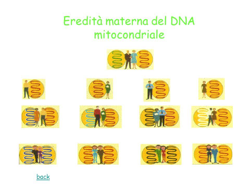 Eredità materna del DNA mitocondriale