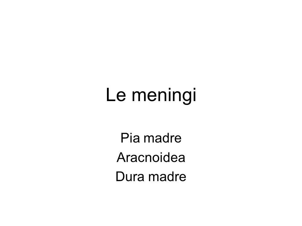 Pia madre Aracnoidea Dura madre