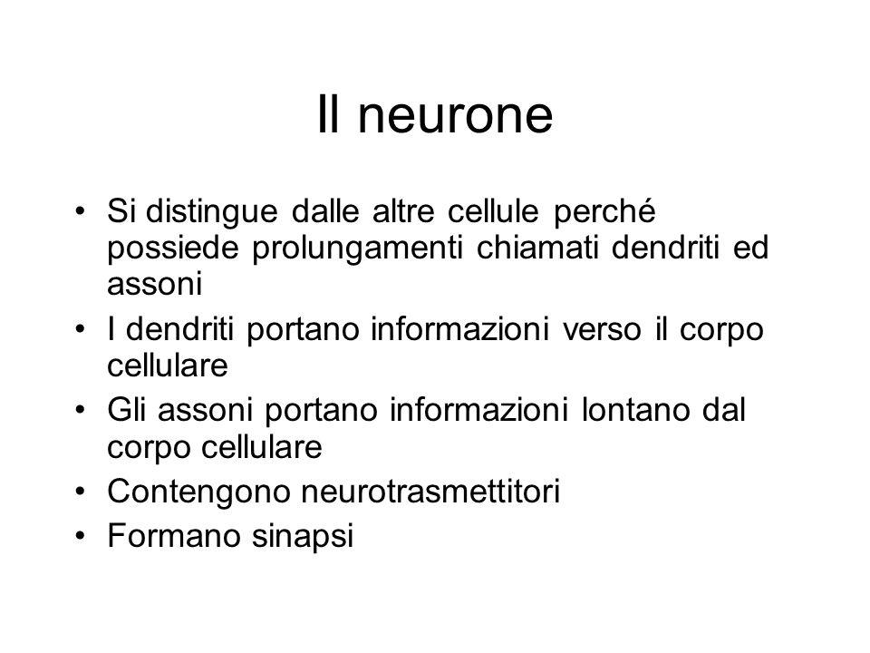 Il neurone Si distingue dalle altre cellule perché possiede prolungamenti chiamati dendriti ed assoni.