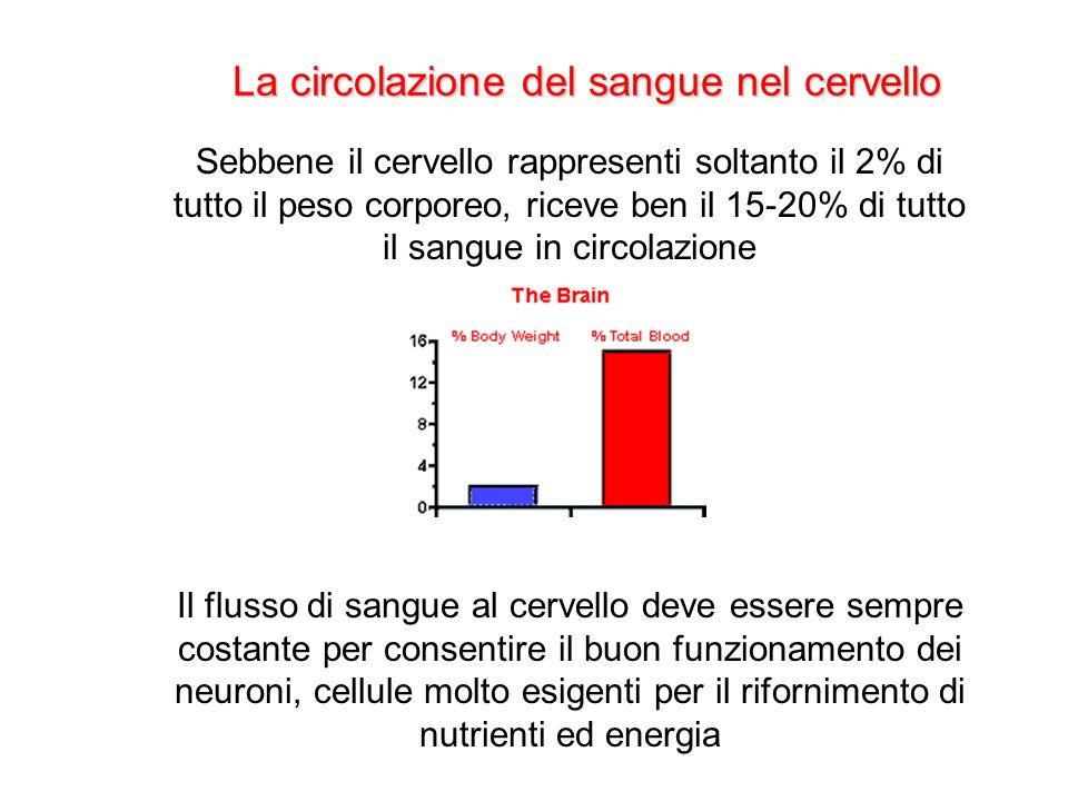 La circolazione del sangue nel cervello