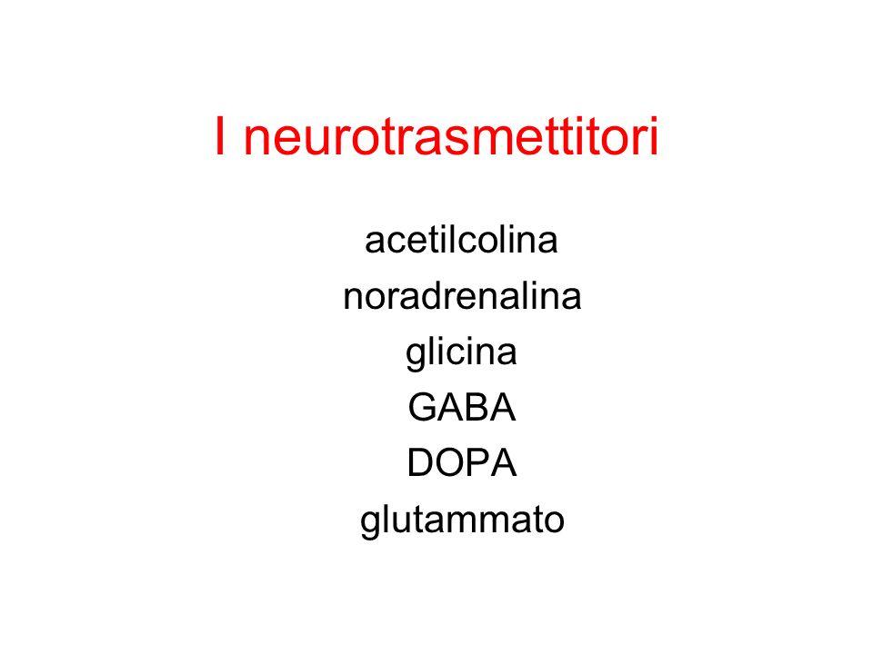 acetilcolina noradrenalina glicina GABA DOPA glutammato