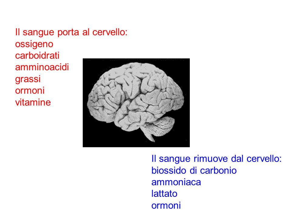 Il sangue porta al cervello: