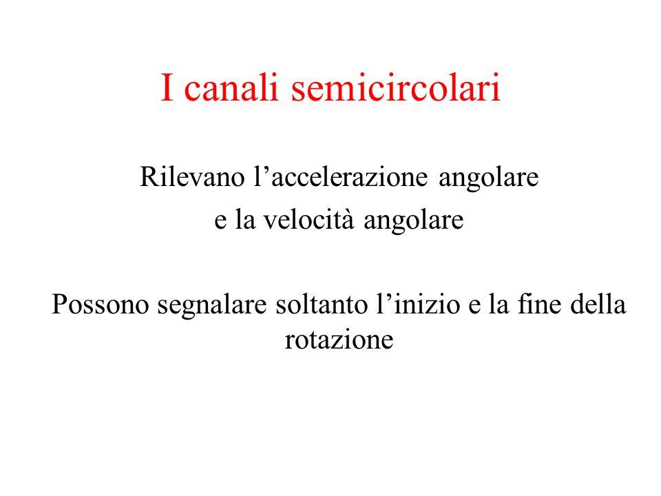 I canali semicircolari