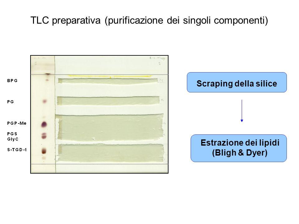 TLC preparativa (purificazione dei singoli componenti)