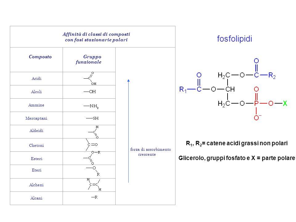 fosfolipidi R1, R2= catene acidi grassi non polari