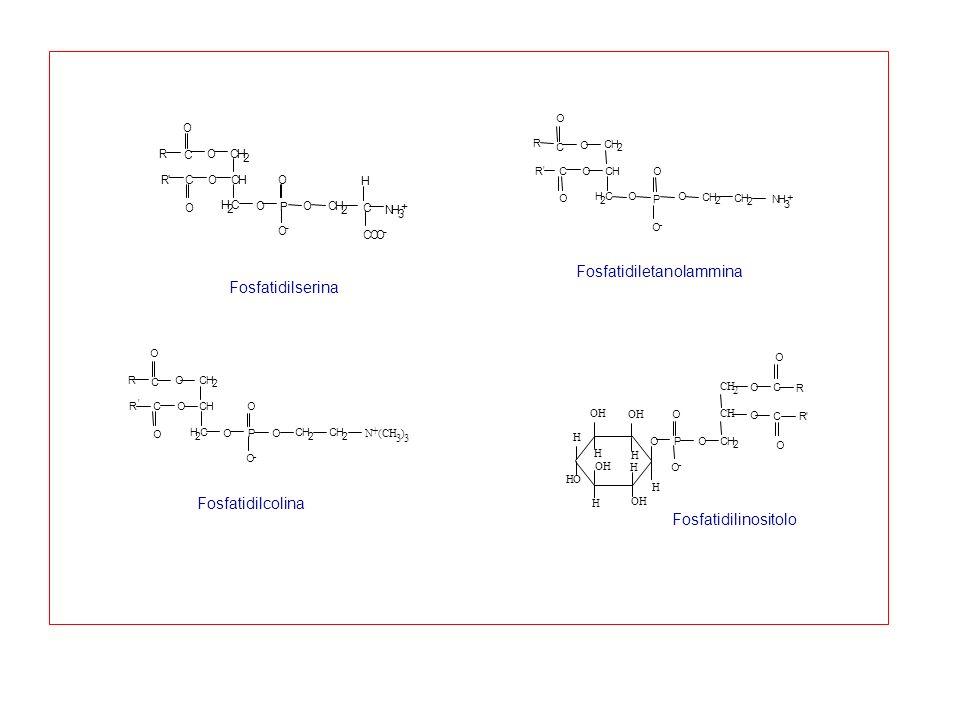 Fosfatidiletanolammina