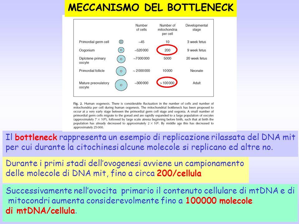 MECCANISMO DEL BOTTLENECK