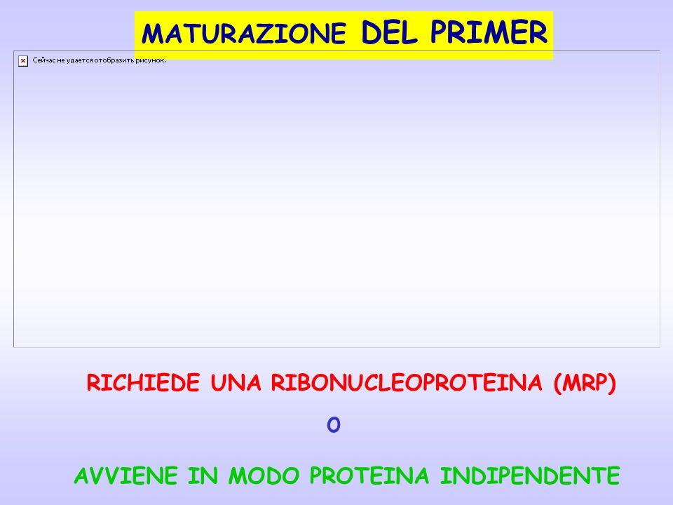 o MATURAZIONE DEL PRIMER RICHIEDE UNA RIBONUCLEOPROTEINA (MRP)