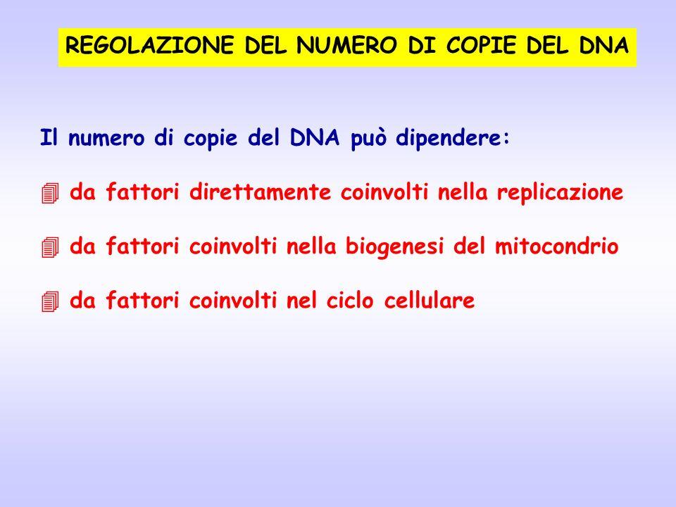 REGOLAZIONE DEL NUMERO DI COPIE DEL DNA
