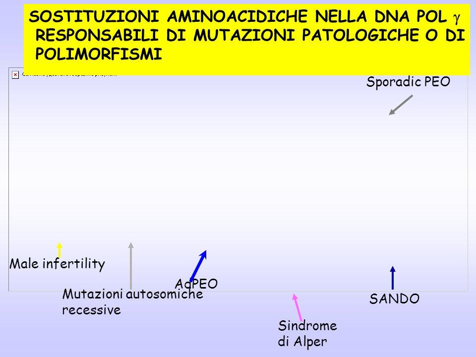 SOSTITUZIONI AMINOACIDICHE NELLA DNA POL g
