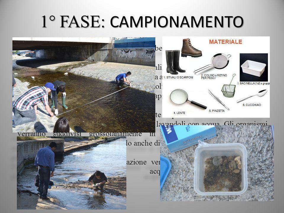 1° FASE: CAMPIONAMENTO