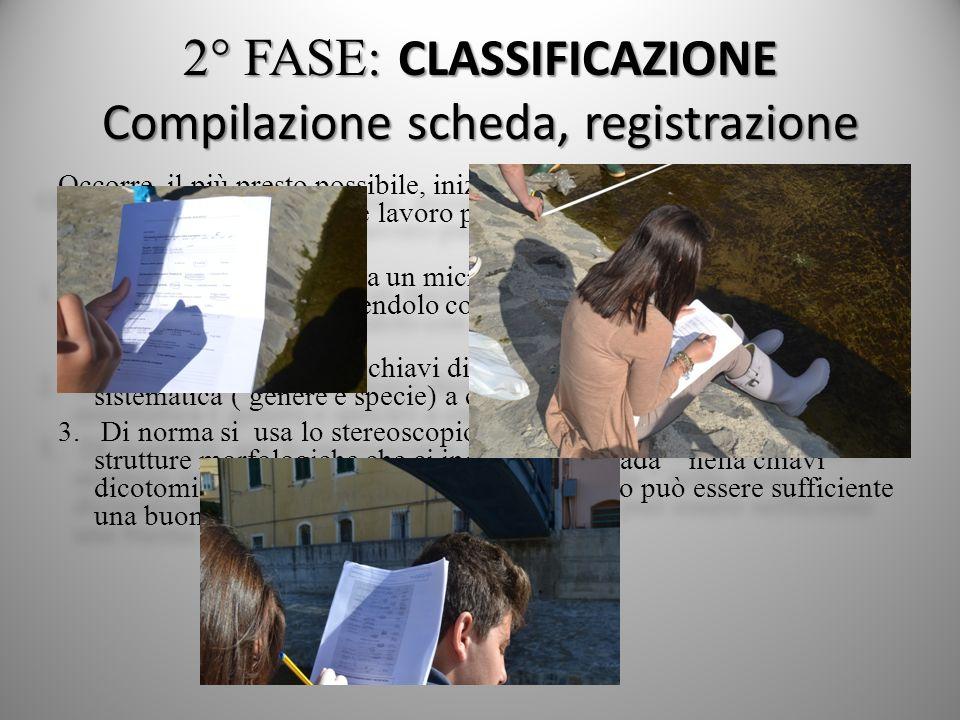 2° FASE: CLASSIFICAZIONE Compilazione scheda, registrazione