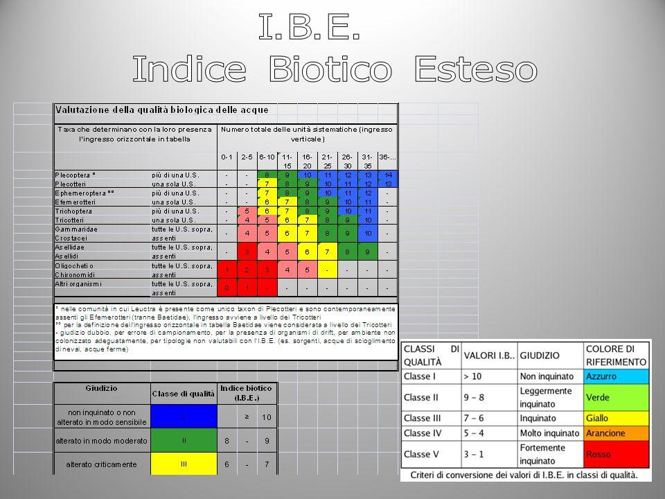 I.B.E. Indice Biotico Esteso