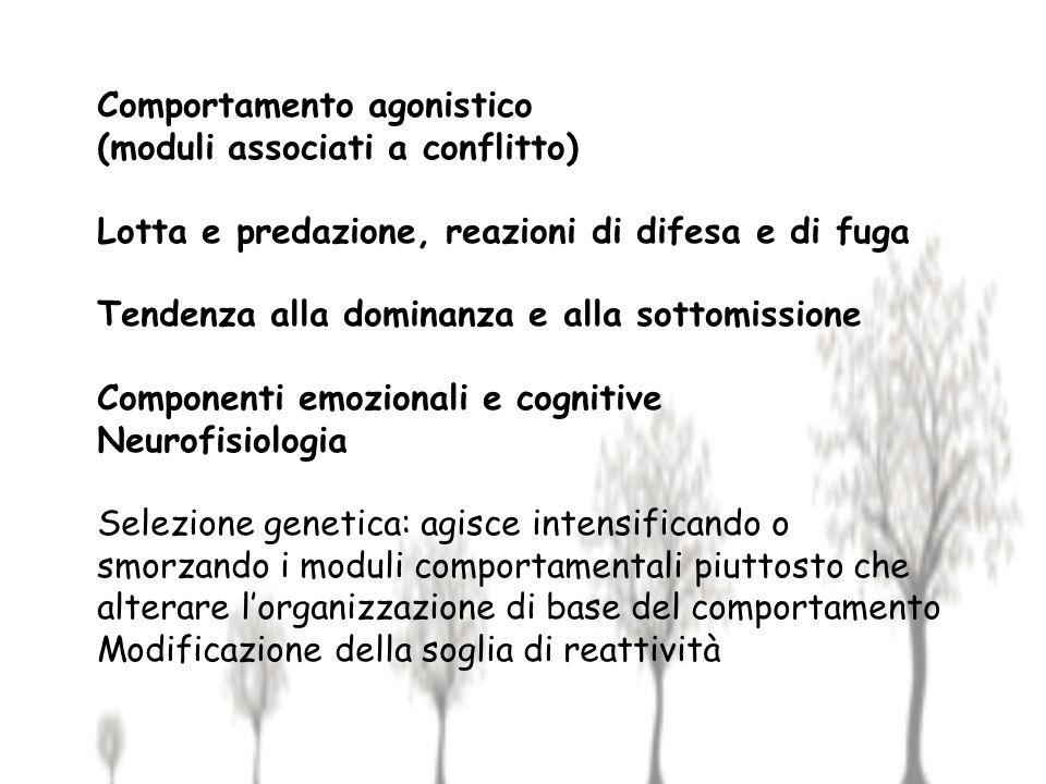 Comportamento agonistico (moduli associati a conflitto)