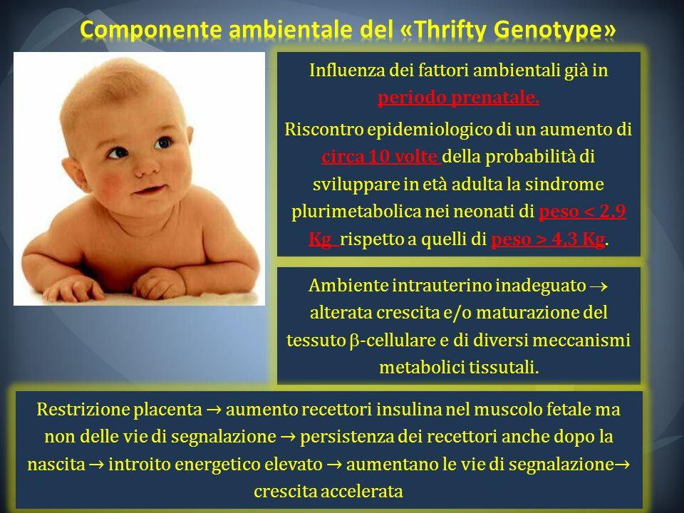 Componente ambientale del «Thrifty Genotype»
