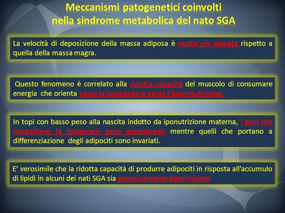 Meccanismi patogenetici coinvolti nella sindrome metabolica del nato SGA