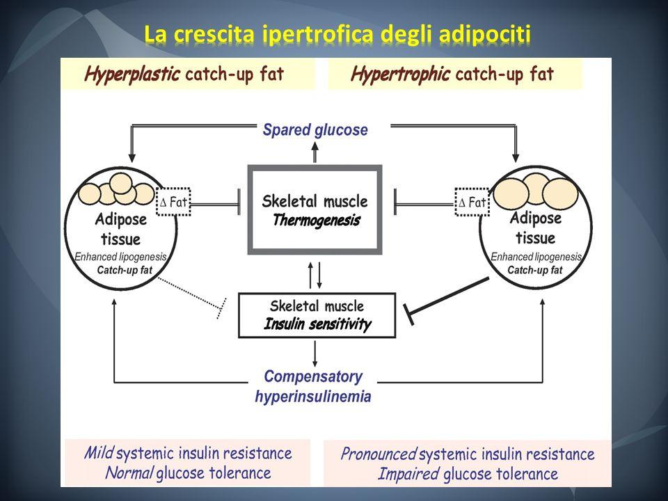 La crescita ipertrofica degli adipociti