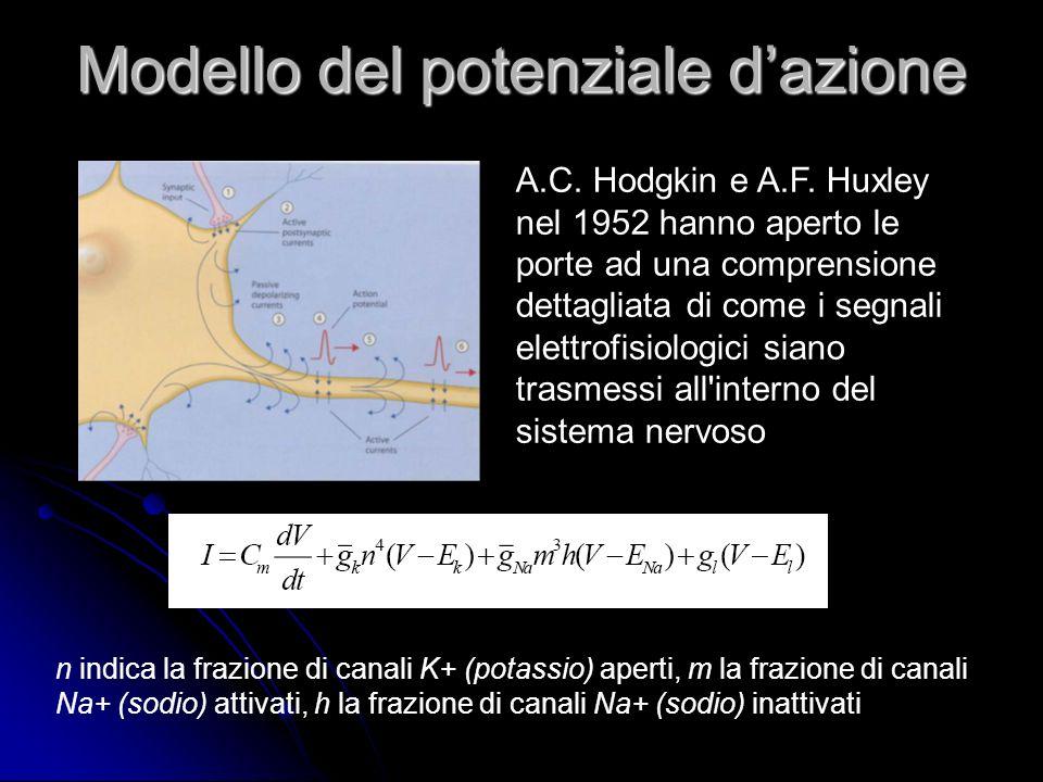 Modello del potenziale d'azione