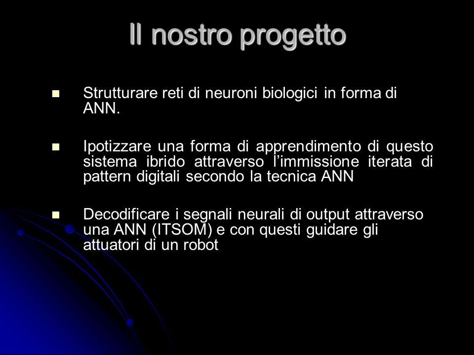 Il nostro progetto Strutturare reti di neuroni biologici in forma di ANN.
