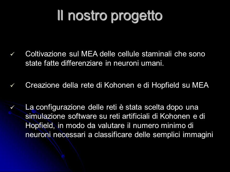 Il nostro progetto Coltivazione sul MEA delle cellule staminali che sono state fatte differenziare in neuroni umani.