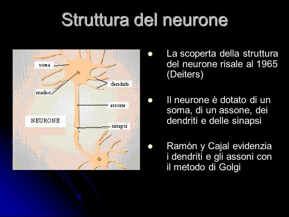Struttura del neurone La scoperta della struttura del neurone risale al 1965 (Deiters)