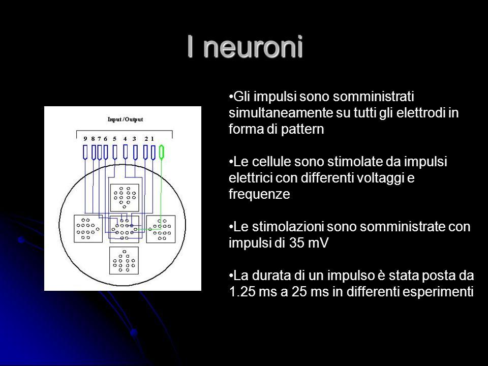 I neuroni Gli impulsi sono somministrati simultaneamente su tutti gli elettrodi in forma di pattern.