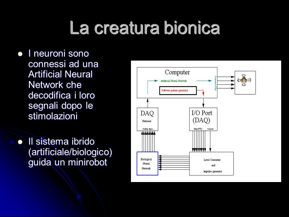 La creatura bionica I neuroni sono connessi ad una Artificial Neural Network che decodifica i loro segnali dopo le stimolazioni.