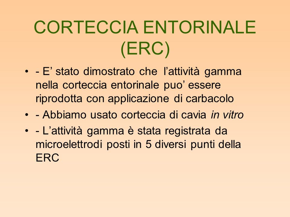 CORTECCIA ENTORINALE (ERC)