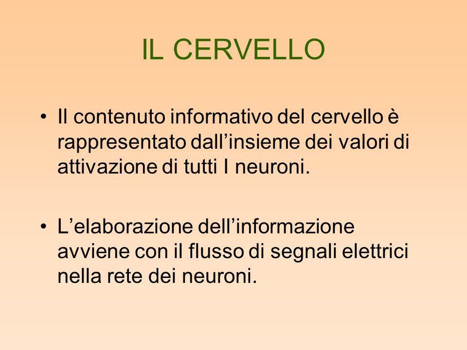 IL CERVELLO Il contenuto informativo del cervello è rappresentato dall'insieme dei valori di attivazione di tutti I neuroni.