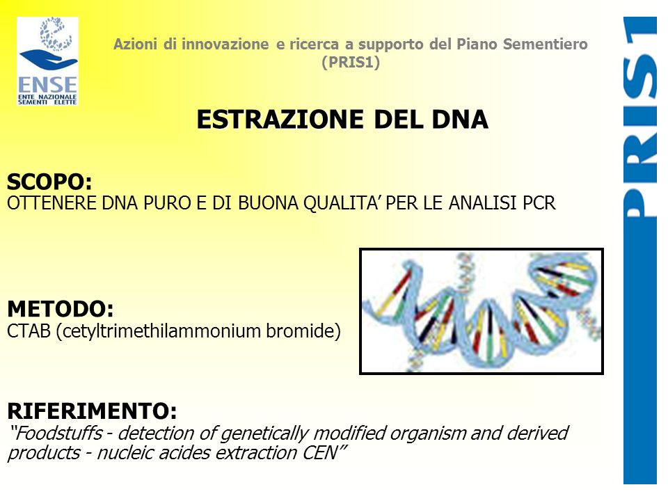 ESTRAZIONE DEL DNA SCOPO: METODO: RIFERIMENTO: