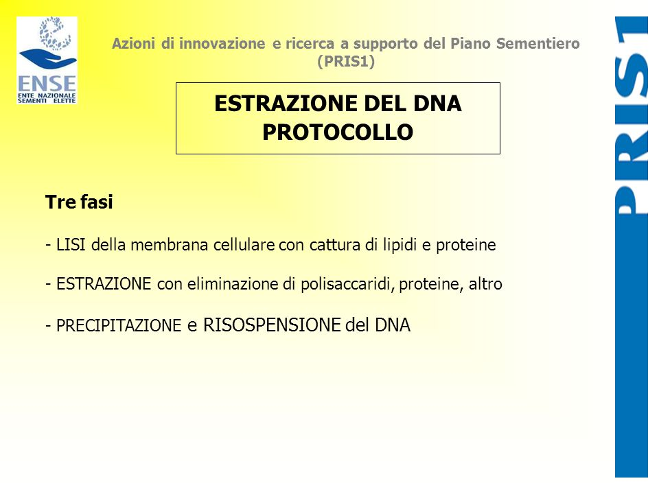ESTRAZIONE DEL DNA PROTOCOLLO
