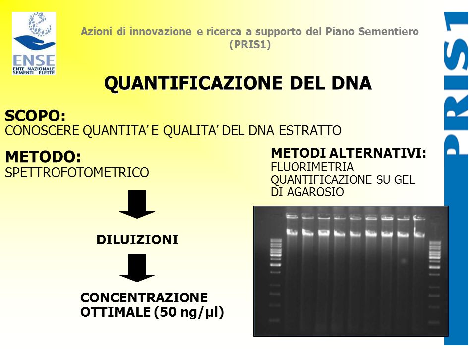 Calcolo concentrazione dna spettrofotometro 11