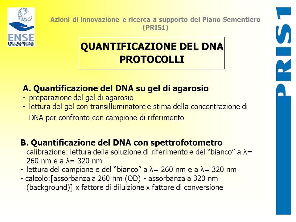 QUANTIFICAZIONE DEL DNA