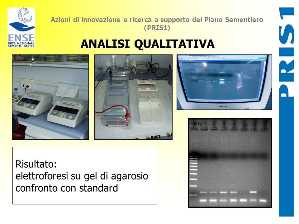 ANALISI QUALITATIVA Risultato: elettroforesi su gel di agarosio