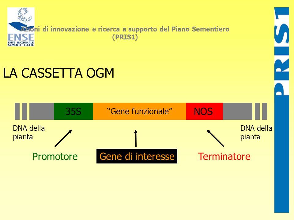 LA CASSETTA OGM 35S NOS Promotore Gene di interesse Terminatore