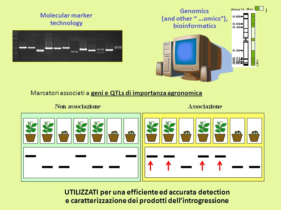 UTILIZZATI per una efficiente ed accurata detection