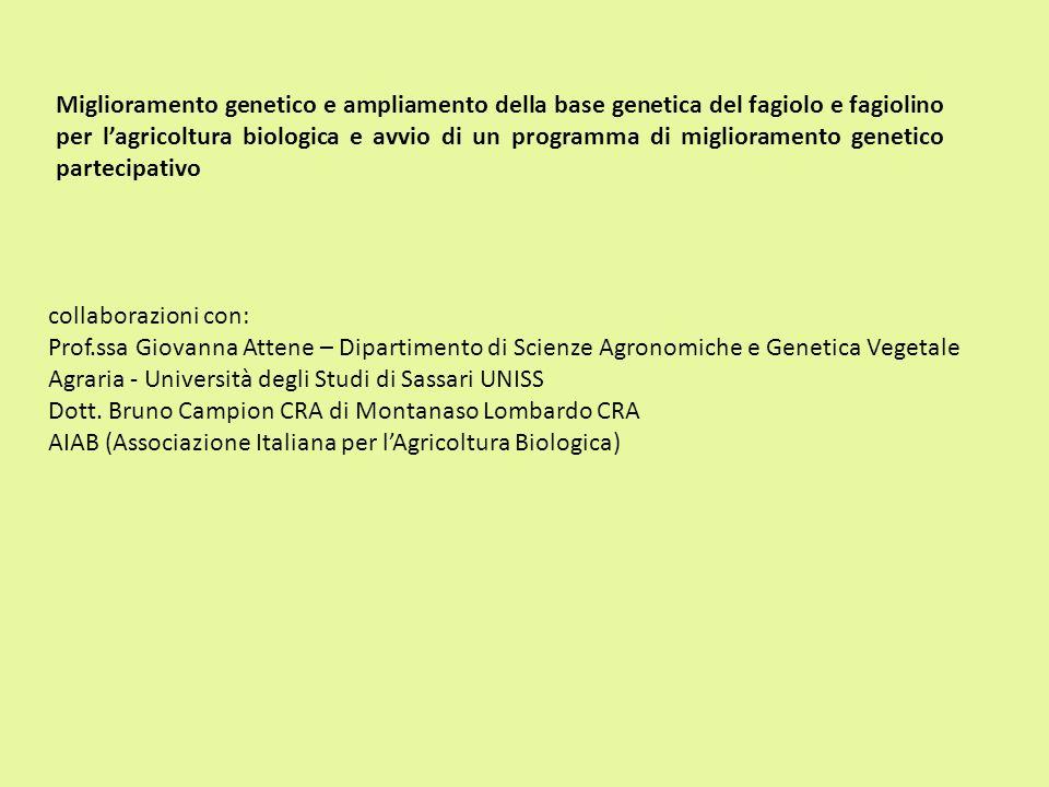 Miglioramento genetico e ampliamento della base genetica del fagiolo e fagiolino per l'agricoltura biologica e avvio di un programma di miglioramento genetico partecipativo