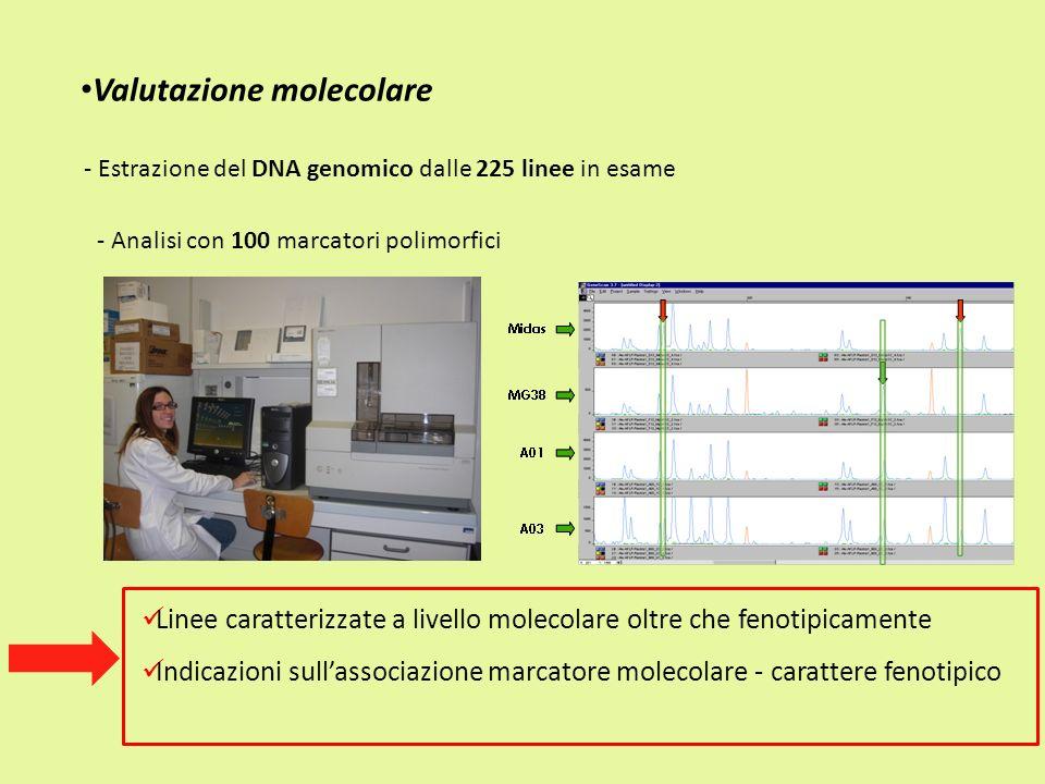 Valutazione molecolare