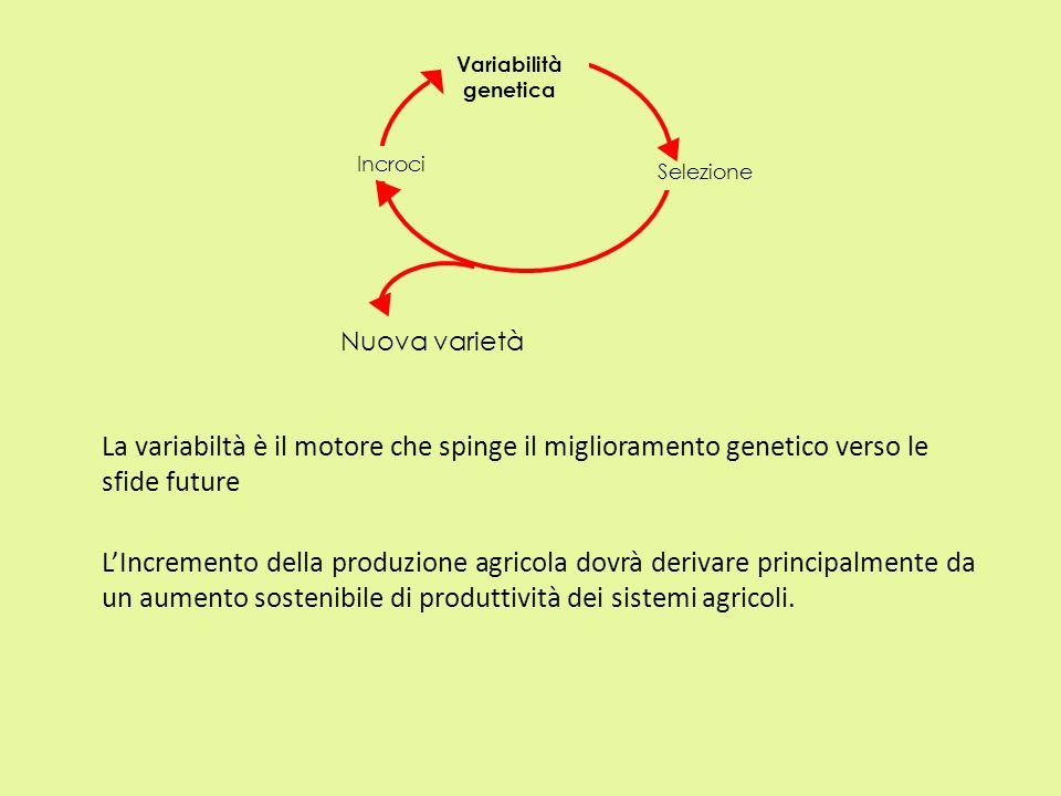 Nuova varietà Variabilità genetica. Selezione. Incroci. La variabiltà è il motore che spinge il miglioramento genetico verso le sfide future.